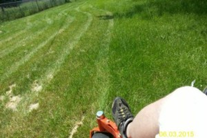 Photo #14: DRC - residential and small business Lawn Care