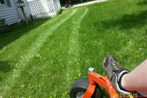 Photo #13: DRC - residential and small business Lawn Care