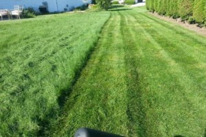 Photo #7: DRC - residential and small business Lawn Care