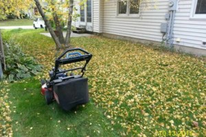Photo #4: DRC - residential and small business Lawn Care