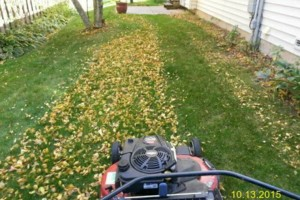 Photo #2: DRC - residential and small business Lawn Care