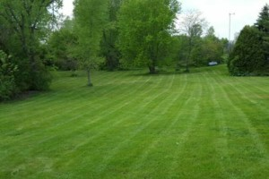 Photo #1: DRC - residential and small business Lawn Care