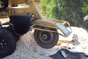 Photo #1: STUMP GRINDING, LOT CLEARING, STUMP REMOVAL. ACCURATE TREE SERVICE