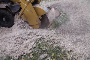 Photo #2: PAINLESS STUMP GRINDING