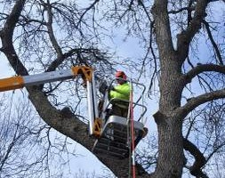 Photo #8: Tree & Lawn Care Services Available! Middleton Tree Worx