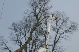 Photo #7: Tree & Lawn Care Services Available! Middleton Tree Worx