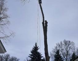 Photo #5: Tree & Lawn Care Services Available! Middleton Tree Worx