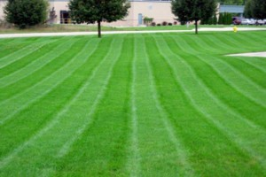 Photo #1: Rite-Way Lawn care & Snow Service LLC
