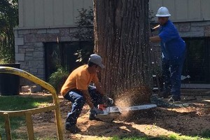 Photo #1: Tree Removal, Trimming, Stump Removal and more