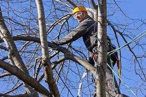 Photo #2: Tree Removal, Trimming, Stump Removal and more