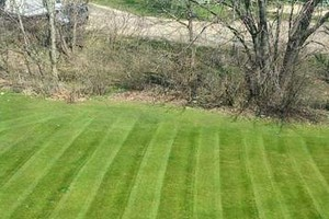 Photo #1: Lawn Care - 25-30 dollars per application