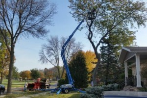 Photo #3: CK Lawn & Landscape. Tree Trimming, Brush Chipping & Stump Grinding