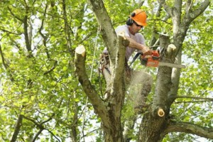 Photo #1: Lowe Tree Services - Tree trimming, removal, brush haul off, etc.