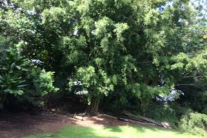 Photo #24: Elite Tree and Lawn Care Services: High Quality Work /Competitive Rates