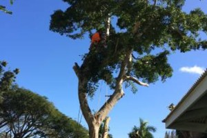 Photo #20: Elite Tree and Lawn Care Services: High Quality Work /Competitive Rates