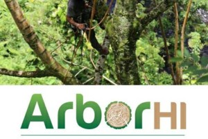Photo #3: Arbor HI. Tree Removal & Pruning - INSURED - BBB Accredited - Crane Service