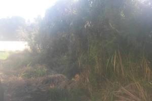 Photo #8: Tree trimming, Yard cleaning, Mason work, Debris hauling