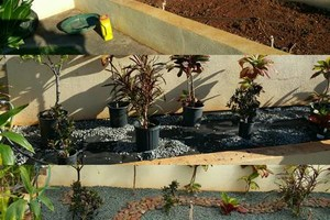 Photo #1: QUALITY at AFFORDABLE PRICES! OAHU COMPLETE YARD SERVICE!