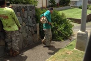 Photo #3: Cheapest Landscaping & Yard Service