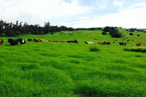 Photo #1: Quality Ranch Fencing, Land Clearing & Mowing