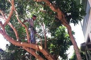 Photo #3: Redmond Tree Service. Tree Pruning & Tree Removal