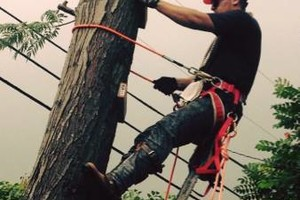 Photo #5: PROFESSIONAL TREE SERVICES