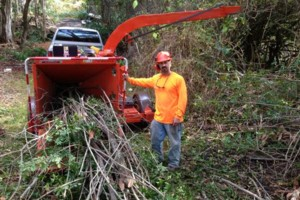 Photo #9: TREES, TREES, TREES, Landscape and tractor work