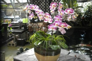 Photo #23: Added Decor for Party's- centerpeices! Kawamoto Orchid Nursery