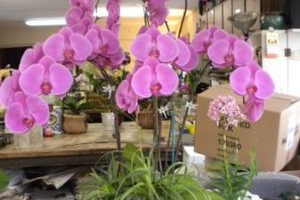 Photo #22: Added Decor for Party's- centerpeices! Kawamoto Orchid Nursery