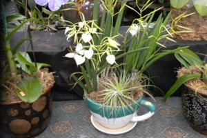 Photo #21: Added Decor for Party's- centerpeices! Kawamoto Orchid Nursery