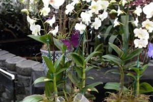 Photo #20: Added Decor for Party's- centerpeices! Kawamoto Orchid Nursery