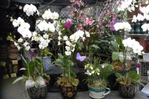 Photo #19: Added Decor for Party's- centerpeices! Kawamoto Orchid Nursery