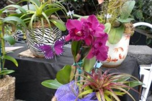Photo #18: Added Decor for Party's- centerpeices! Kawamoto Orchid Nursery
