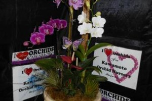Photo #17: Added Decor for Party's- centerpeices! Kawamoto Orchid Nursery