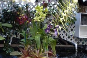 Photo #16: Added Decor for Party's- centerpeices! Kawamoto Orchid Nursery