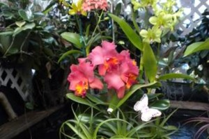 Photo #15: Added Decor for Party's- centerpeices! Kawamoto Orchid Nursery