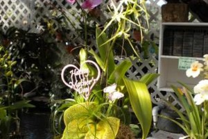 Photo #14: Added Decor for Party's- centerpeices! Kawamoto Orchid Nursery
