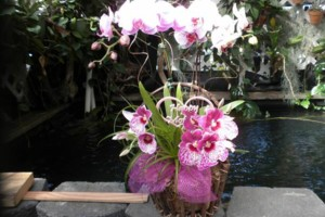 Photo #13: Added Decor for Party's- centerpeices! Kawamoto Orchid Nursery