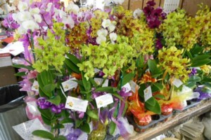 Photo #12: Added Decor for Party's- centerpeices! Kawamoto Orchid Nursery