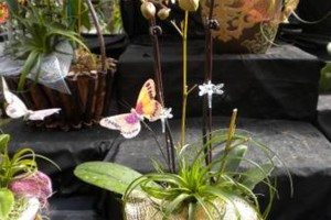 Photo #11: Added Decor for Party's- centerpeices! Kawamoto Orchid Nursery