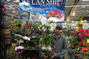 Photo #10: Added Decor for Party's- centerpeices! Kawamoto Orchid Nursery