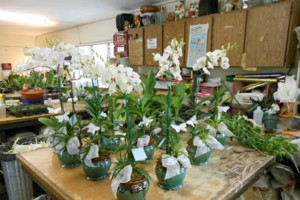 Photo #9: Added Decor for Party's- centerpeices! Kawamoto Orchid Nursery