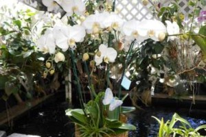 Photo #8: Added Decor for Party's- centerpeices! Kawamoto Orchid Nursery