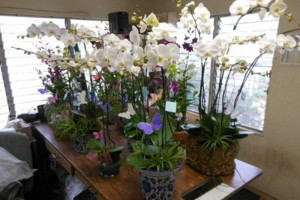 Photo #7: Added Decor for Party's- centerpeices! Kawamoto Orchid Nursery