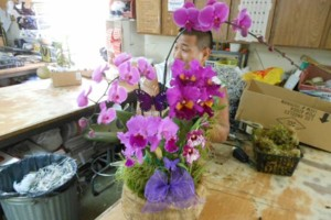 Photo #6: Added Decor for Party's- centerpeices! Kawamoto Orchid Nursery