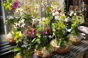 Photo #5: Added Decor for Party's- centerpeices! Kawamoto Orchid Nursery