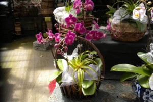 Photo #4: Added Decor for Party's- centerpeices! Kawamoto Orchid Nursery