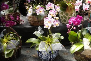 Photo #3: Added Decor for Party's- centerpeices! Kawamoto Orchid Nursery