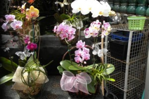 Photo #2: Added Decor for Party's- centerpeices! Kawamoto Orchid Nursery