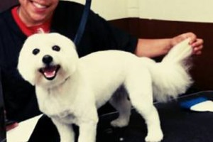 Photo #5: CERTIFIED DOG GROOMER/STYLIST